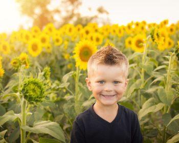 Child amongst sunflowers