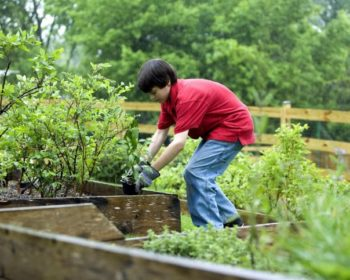 Family project: landscaping ideas you can do with your children