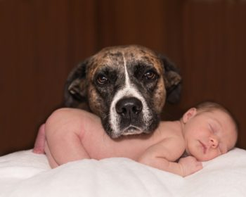Dog with new baby