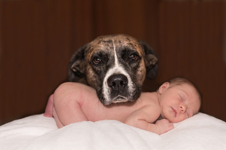 Pets for New Parents
