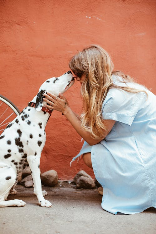 blonde lady getting a kiss from her Dalmation dog outside