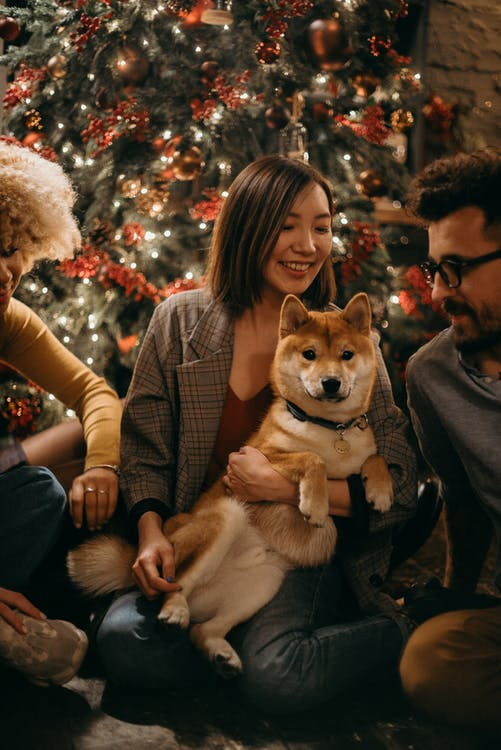 dogs bring people together around Christmas tree