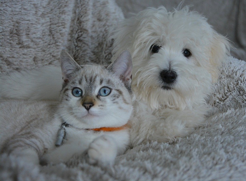 Cat vs Dog: Which Should Be Your New Family Pet?